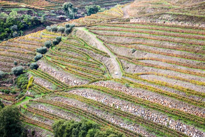 Douro-Tal im Herbst