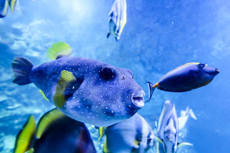 Klimahaus Bremerhaven: Fische